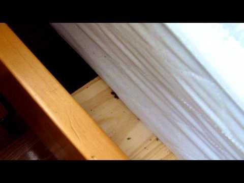 Bedbug Frenzy During Heat Treatment