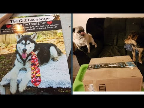 the-gift-exchange-with-the-adventures-of-tonka-the-malamute-aka-waterwolf