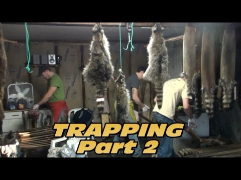 Trapping Furbearers 2013 Part 2