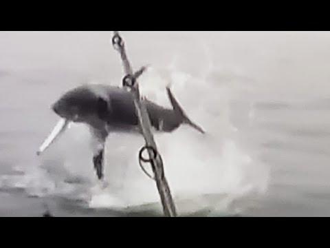 MASSIVE MAKO Airs Out On A Big Kingfish!!! Unbelievable Deep Sea Fishing!!!