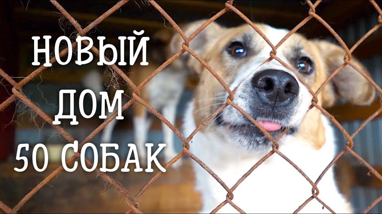 Строим Дом для бездомных собак