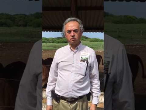 U.S.Grains Council DDGS feeding trial at Veracruz