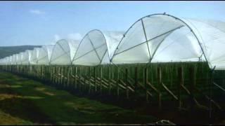 Tunele w uprawie borówki wysokiej