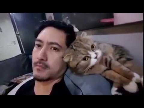 Cat Cleans Owners Hair