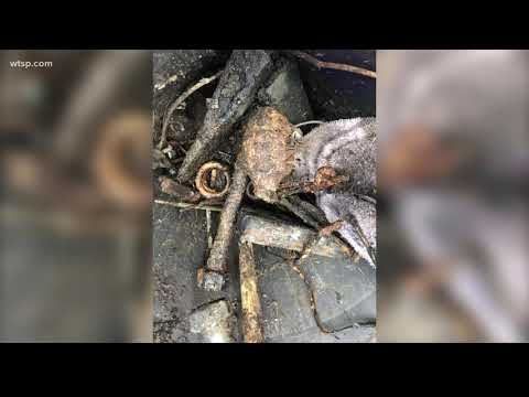 Florida metal hunters found a WWII-era grenade — and brought it to a local Taco Bell