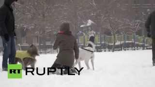 Скачать Внезапные каникулы дети рады снежной буре в Нью Йорке