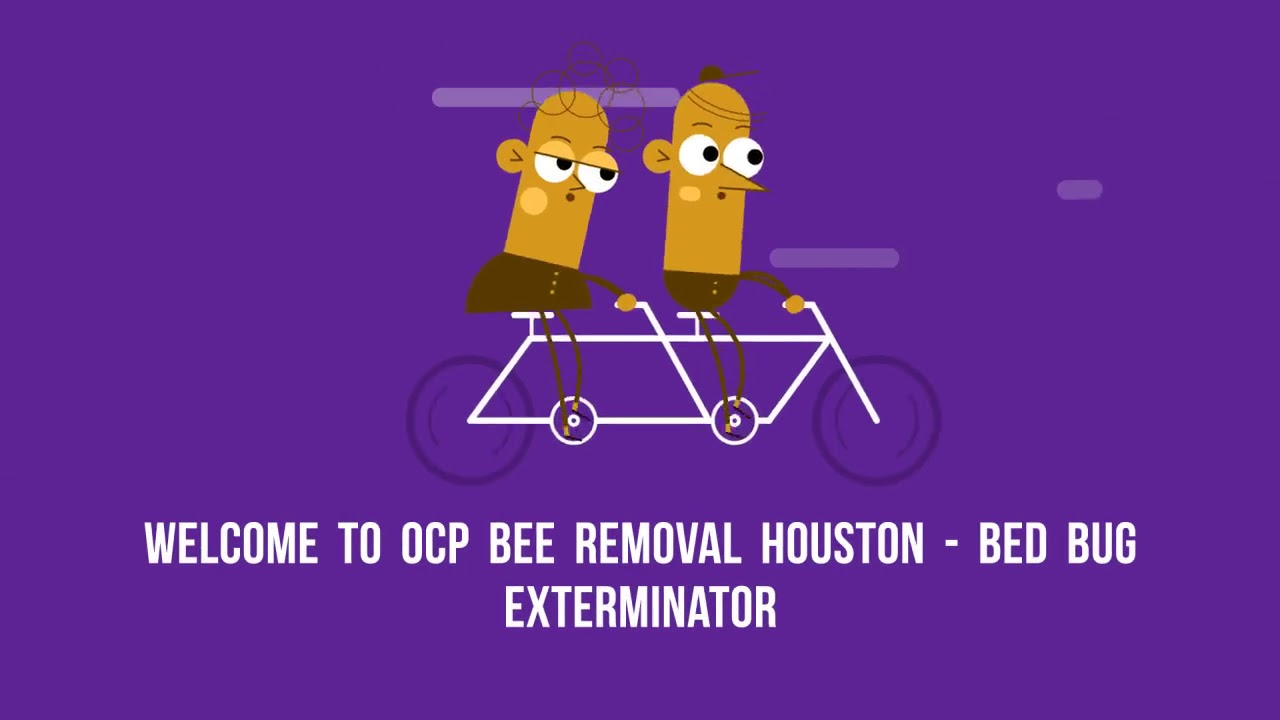 OCP Bee Removal Service in Houston, TX