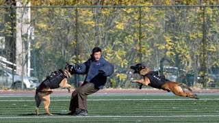 The 'Dog Olympics' kicked off in Beijing