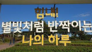 강동구 일자산 허브천문공원의 다양한 꽃과 허브들