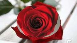 Eine rote Rose und ein Bild von mir