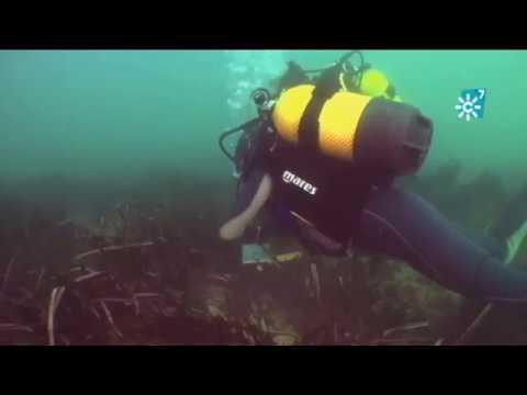 Posidonia oceánica: investigación en el Parque Natural de Cabo de Gata-Níjar (Almería)