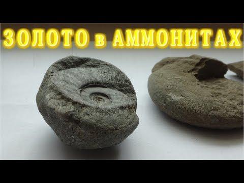 ЗОЛОТО из АММОНИТОВ