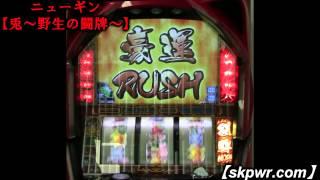パチスロ新機種 ニューギン【兎~野生の闘牌~】試打動画2 thumbnail