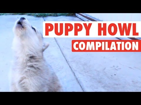 Dogs and Puppies Get Their Howl On