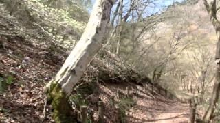 2015 04 18 葛城山のカタクリ