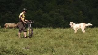 Chiens de protection: le comportement correct à adopter en face de chien de protection