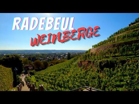 RADEBEUL WEINBERGE | VINEYARDS IN RADEBEUL (Town in Saxony, Germany)