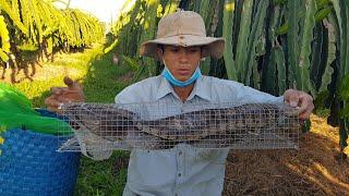 Hoang Dã Bình Thuận #29 Thăm Bẫy Rắn Dính Rắn Khủng Trâu Già Lâu Năm 🤤😨