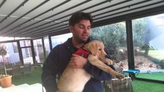 Nina Service Dogs Greek American supports Aspasia Mpogri and Mike, the first service dog in Greece.