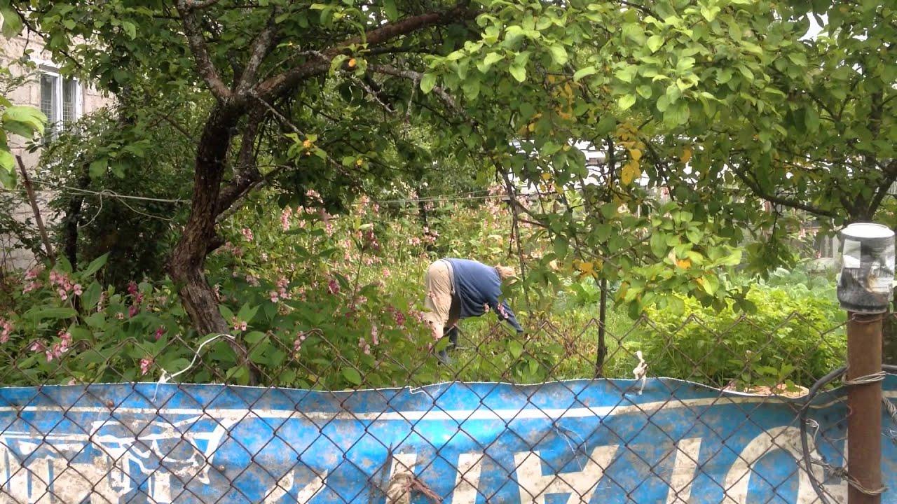 Соседка по даче видео фото 382-553