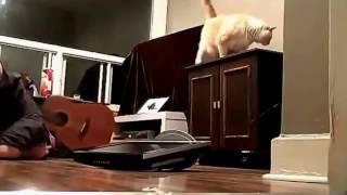 Котики...