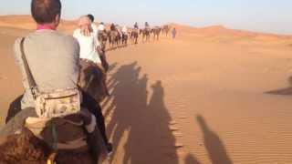 Sahara desert walk