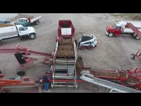 Cole Certified Seed Potato Harvest 2016