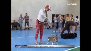 Міжнародна виставка собак у Сумах