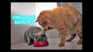 Приколы с кошками и котами #3. Подборка смешных и интересных видео с котиками и кошечками 2017