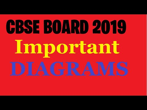 Cbse Board 2019 |12th Class | Biology Important Diagrams .