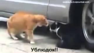 Развод по-кошачьи