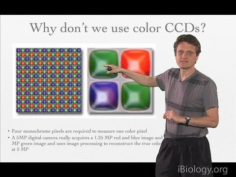 Microscopy: Cameras And Detectors I: How Do They Work? (Nico Stuurman)
