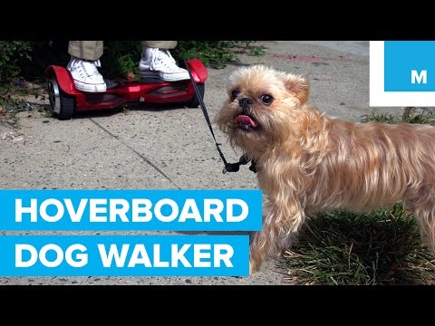 Hoverboard-Riding Dog Walker has a Really Bad Day
