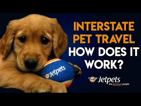 How it Works  Pet Travel Interstate