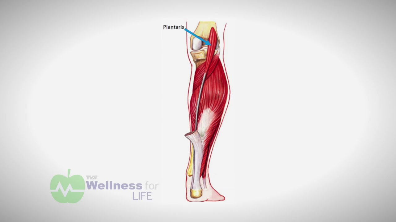 Pain To Performance The Plantaris Muscle Youtube