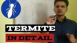 Termitesareeusocialinsects How??