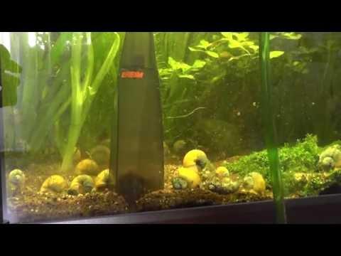 Aquarium reinigen mit einer saugglocke doovi for Aquarium reinigen