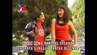 Cucak Rowo - Endang (Dangdut House Version)