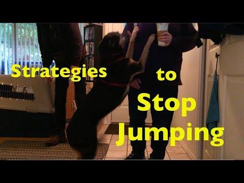 5 Strategies to Stop Your Dog Jumping on Visitors at the Door