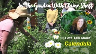 Green Path Herb School - Herbalist Elaine Sheff talks about Calendu...