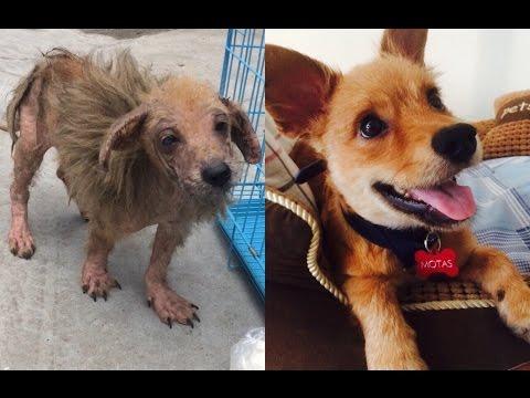 Rescatando a Motas, un adorable perro callejero en China