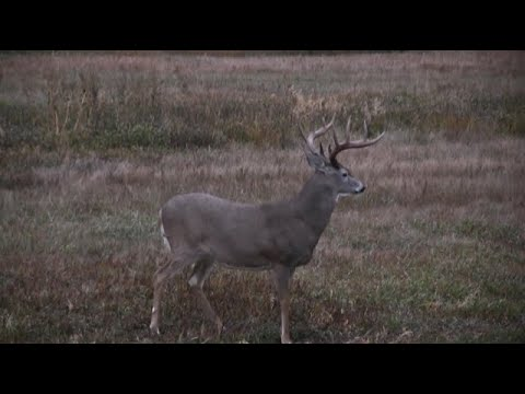 Best Deer Hunting Video EVER!!! 2020 Whitetail Bowhunt