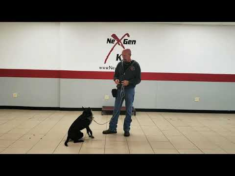 Teaching your dog a place/spot command