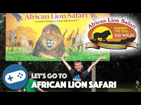 African Lion Safari Adventure