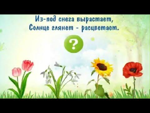 Загадки про цветы. загадка ответ. мультики.