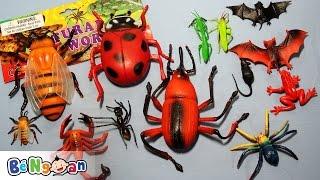 Đồ Chơi Côn Trùng - Insect Toys