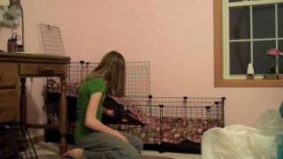 How to Clean a Guinea Pig Cage With Fleece