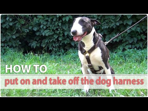 How to put on and take off the dog harness...