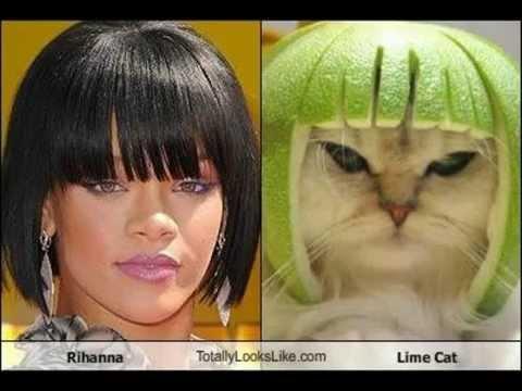 Celebrities Who Have Animal Doppëlgangers on the Internet ...