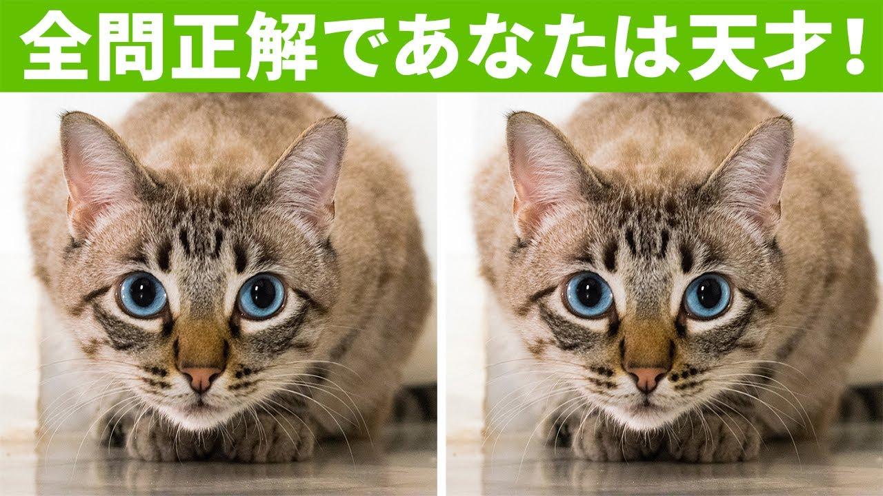 【間違い探しで脳トレ】2枚の写真の間違いを全問解けたらあなたは天才!
